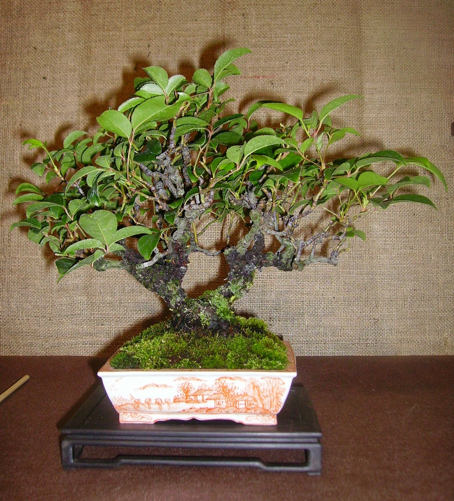 Bespoke Bonsai Stands September 2013