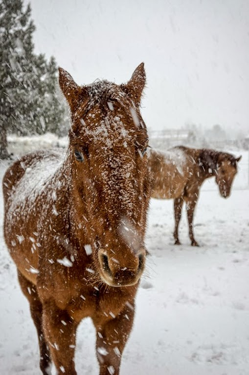 caballos nieve
