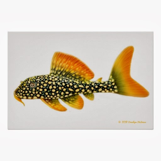 Finatics Tropical Fish Fish For This Week