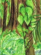 Selva Alta Perennifolia