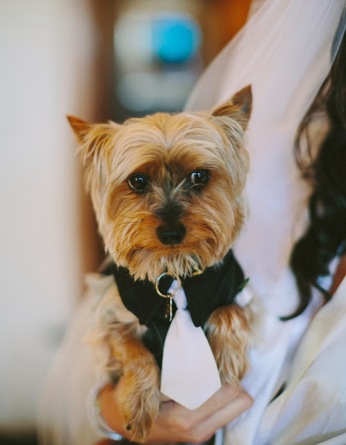 Bacara Resort Wedding Ring Bearer Dog