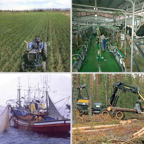 Trabalho curso agricultura e pescas