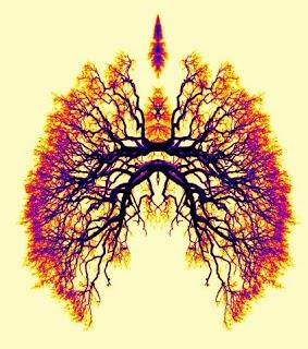 lungs, pranayama, breath