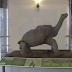 Solitario George, la última tortuga gigante de Galápagos
