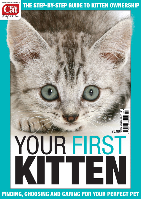 Your First Kitten Cover