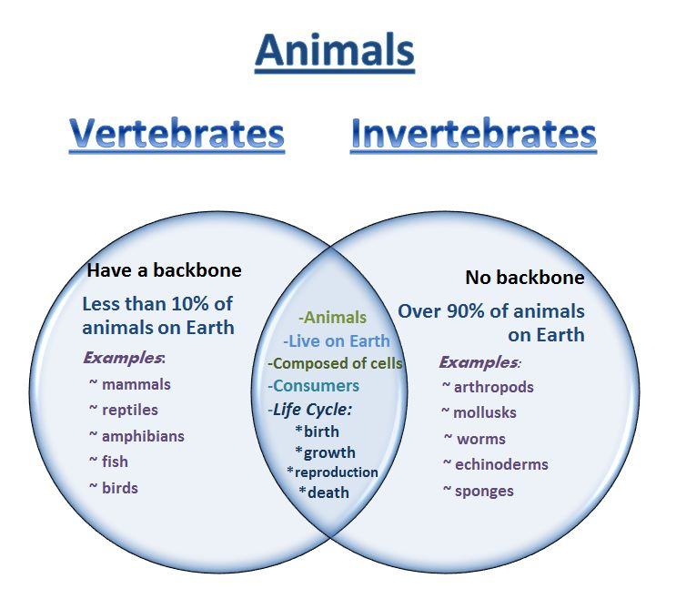 Venn diagram vertebrates and invertebrates