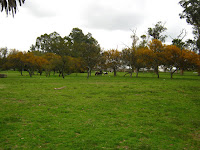 ponys prado uruguay prado parque pony