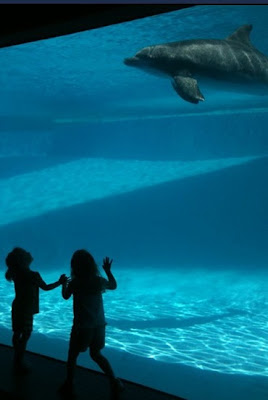 dolphins A Public School Teacher Talks Homeschooling