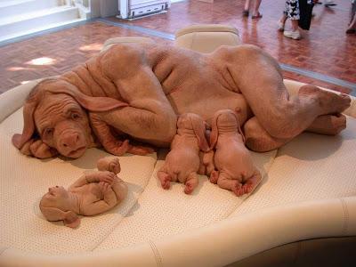 sobat sendiri yang menilai hewan2 ini betap a hebatnya tuhan yang ...