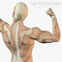 فقط 8 خطوات تقودك لبناء عضلاتك بشكل أسرع مدونة سامي سهيل