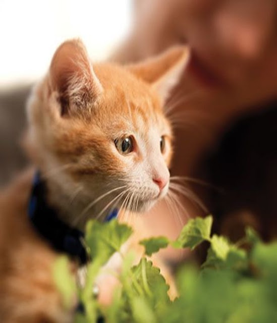 5 Ways To Make Living With A Cat Easier