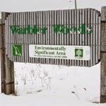 Warbler Woods London Ontario