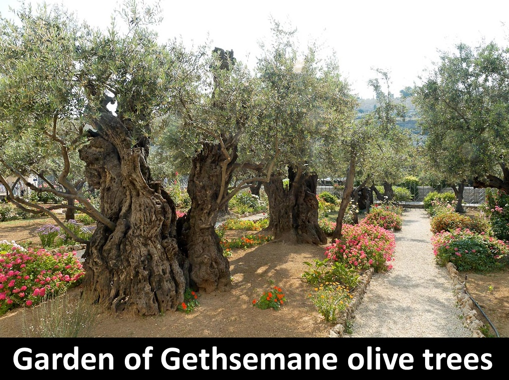 Living the Biblios Garden of Gethsemane Devotional