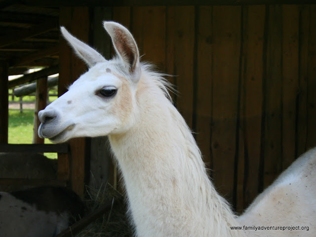 Captains Dilemma: To Llama Park? Or not?