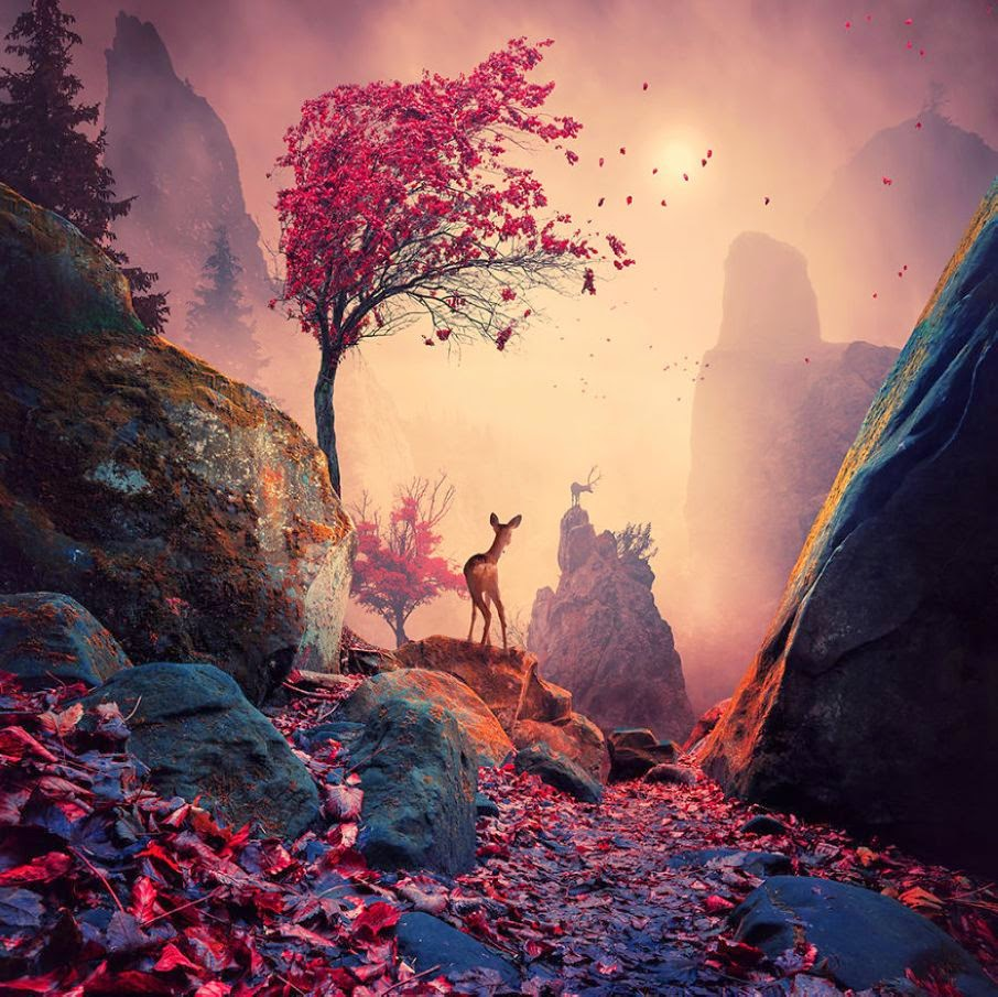World of Dreams Photography by Caras Ionut