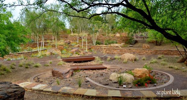 ramblings desert garden