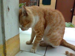 Gambar Binatang Galau Kucing