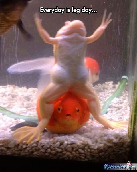 funny animals frog picture