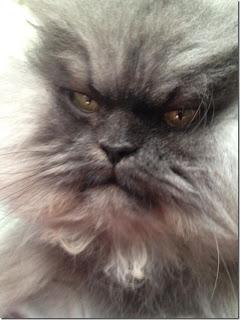 Colonel Meow, Kucing Seram Memiliki Banyak Fans [ www.BlogApaAja.com ]