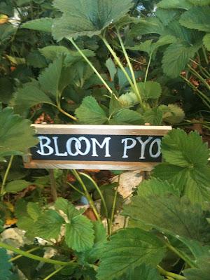 Bloom PYO Strawberry Garden in Covent Garden