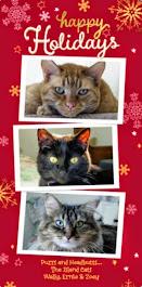 Happy Holidays Island Cats and family!