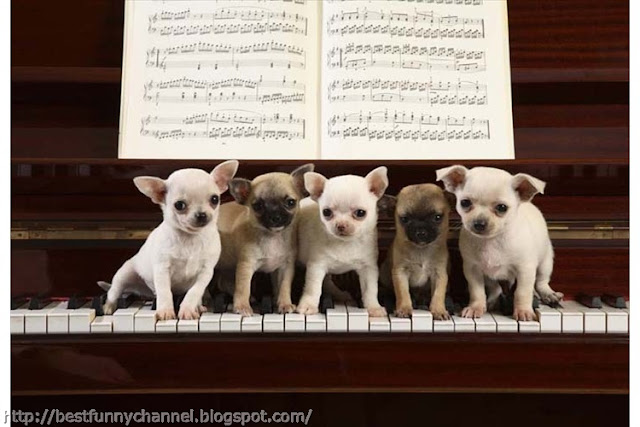 Five funny puppies.