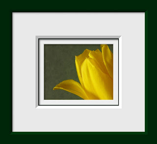 A close up of yellow tulip done in a vintage style on a textured sage background.
