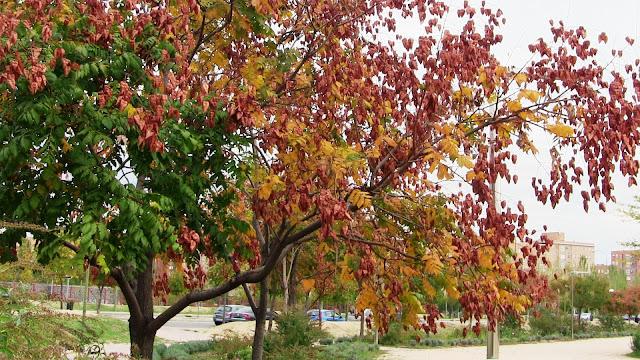Flora de Vicálvaro en otoño  - II