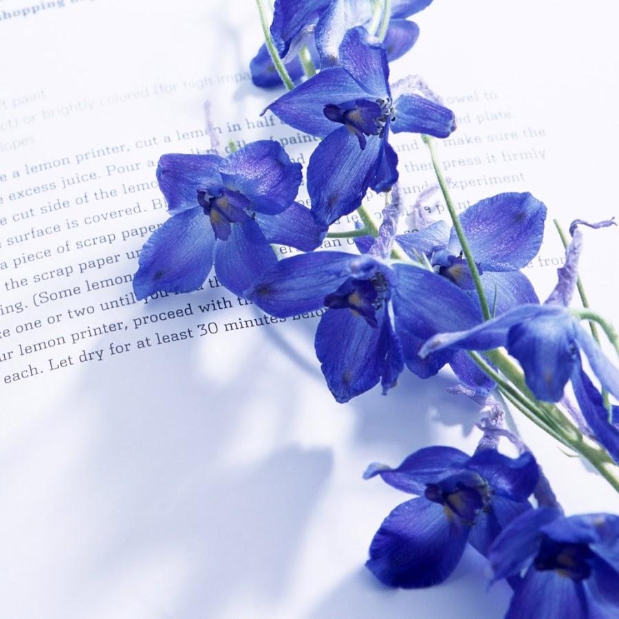 <<<Poemas de colores...>>> - Página 2 Blue_flowers_on_a_book-1024x1024
