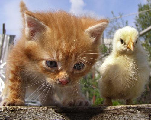 I Gatti di Pasqua!