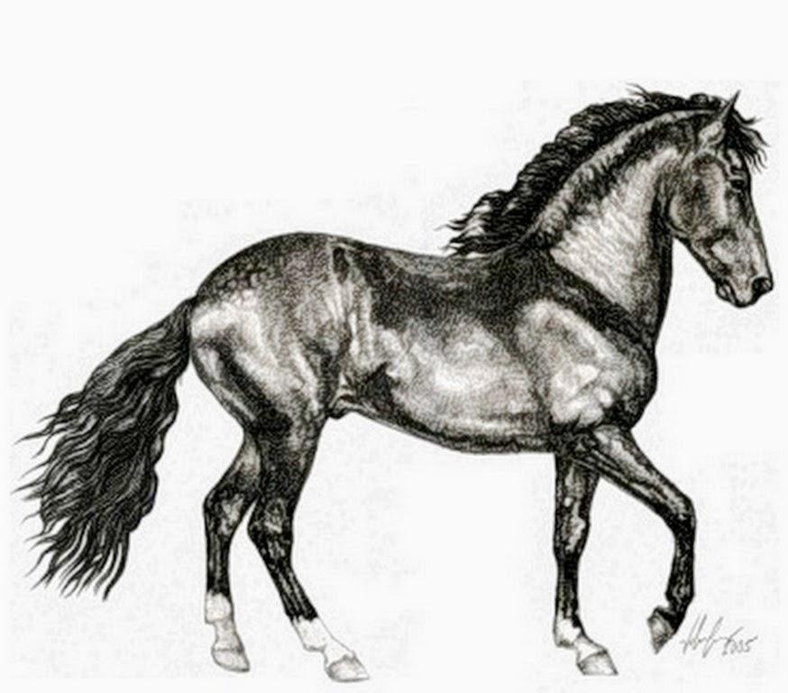 dibujos-de-caballos-a-lapiz
