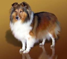 razas de perros que más ladran
