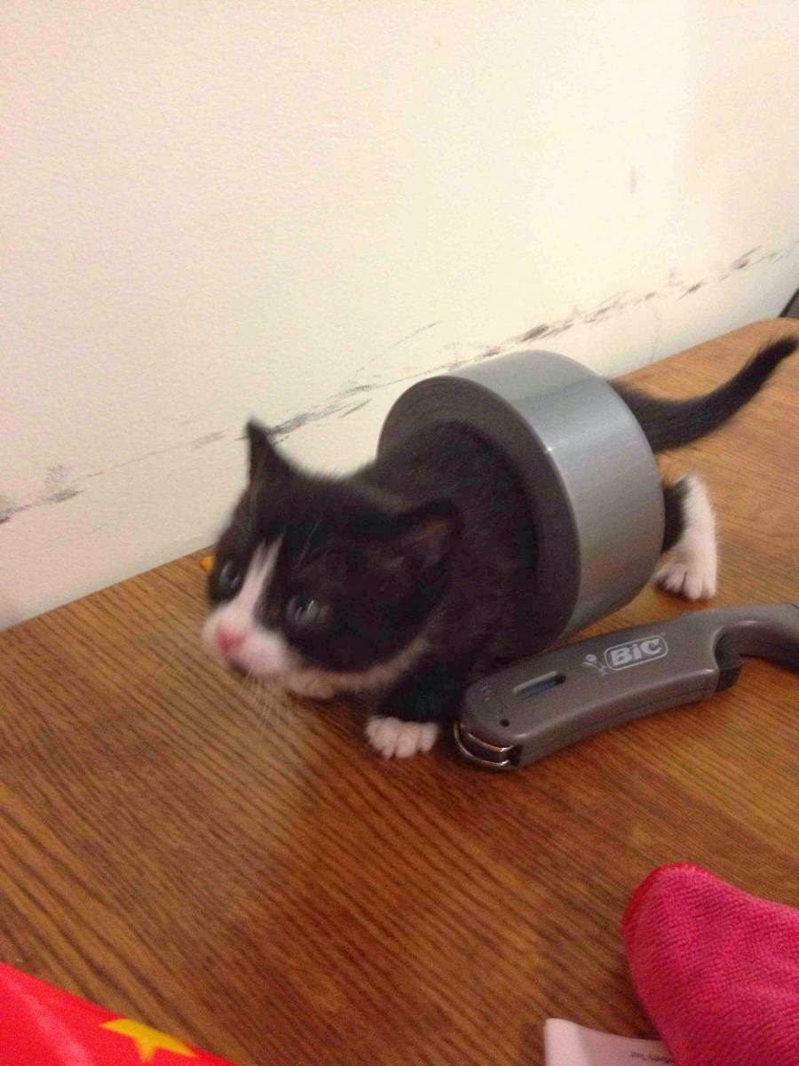 Funny cats - part 87 (40 pics + 10 gifs), kitten brings the duct tape