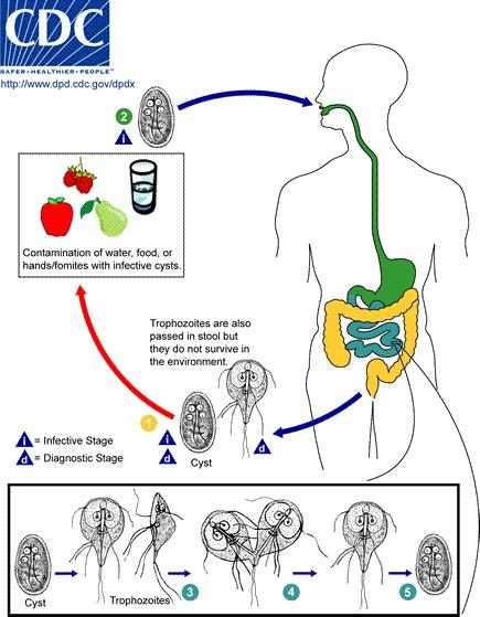Lezioni di un ogulov su parassiti - Farmaci di helminths della persona