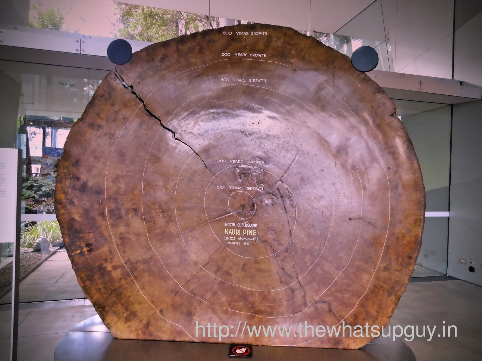 Melbourne Museum Tree Trunk