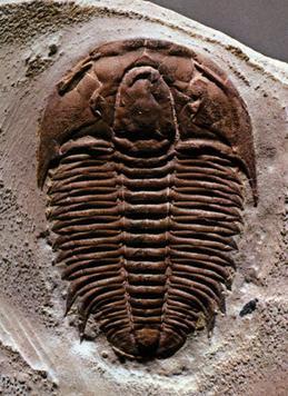 fossils | Popular Science