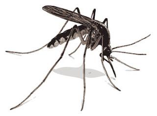 Cara Menghilangkan Nyamuk