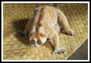 fauna NTT