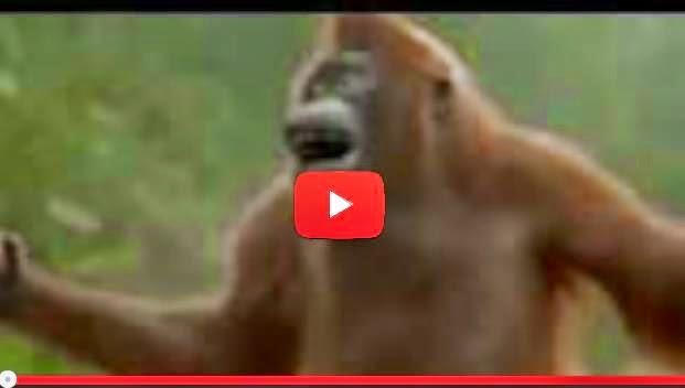 Scimmia Che Balla Divertentissimo Video