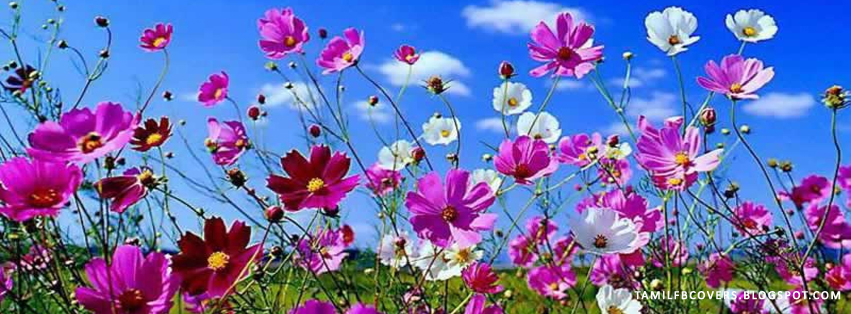 My India Fb Covers Flowers Of Spring Season Fb Cover