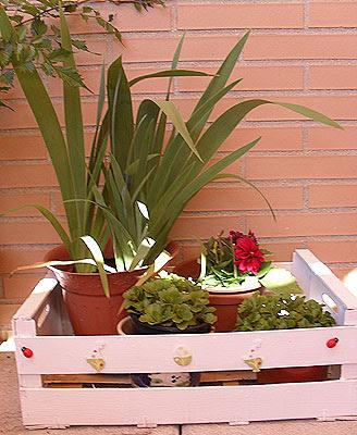 maceteros con cajas de fruta