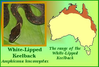 White-lipped keelback