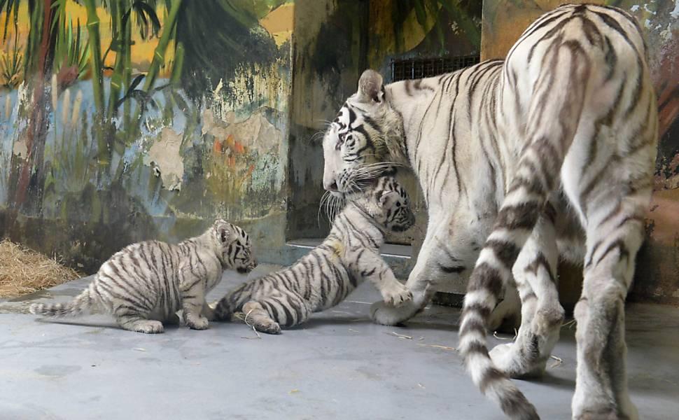 dois filhotes com a mãe