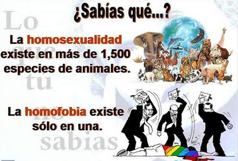 HOMOFOBIA