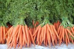Cara Menanam wortel Yang Berkualitas Baik