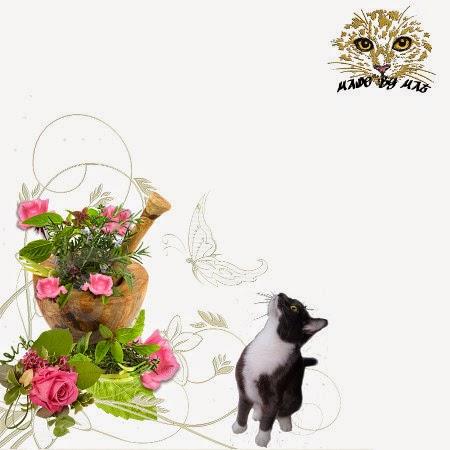 http://4.bp.blogspot.com/-VfraSwtBu-8/U6cARqyDGII/AAAAAAAADZA/H6jaLHpRyIU/s1600/Mat's+Pink+Roses+tn.jpg