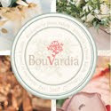 My Bouvardia Indonesia