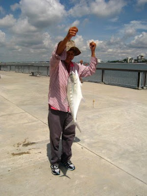 Big Queenfish also know as Sam Poh Gong 三保公 or Talang Caught by Ah Lee at Woodland Jetty Fishing Hotspots.