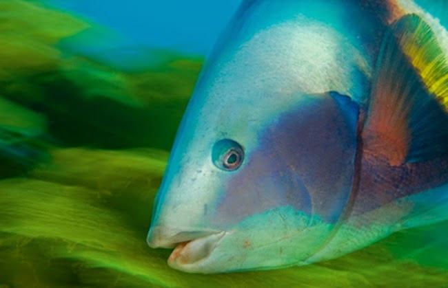 أجمل الأسماك الاستوائية الملونة   - صفحة 2 Colorful-tropical-fishes-17