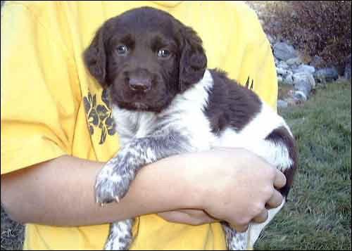 5 Incredibly Cute Pets
